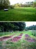 Newmarket_Community Garden, 2007 before & after.jpg